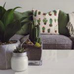 The Benefits of Having  Indoor Plants