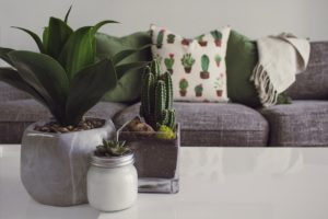 The Benefits of Having  Indoor Plants