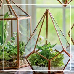 17E01a_L1_indoorGarden_dept_terrariumsPlants_teardrop_tabletop_terrarium