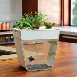 1_Intro-SEO_Indoor-Gardening